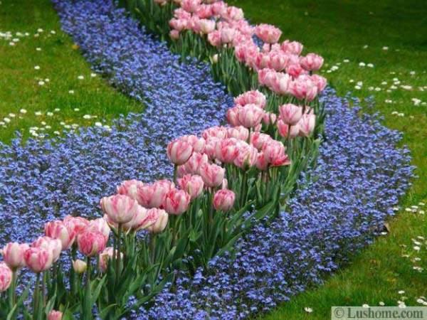 ideas planting tulips create