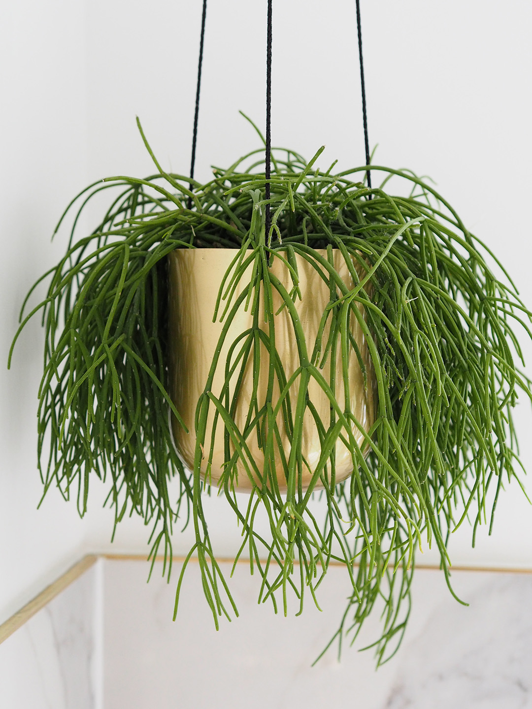 Easiest Indoor Plants To Keep Alive
