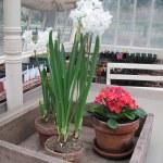 Bulbs in Greenhouse