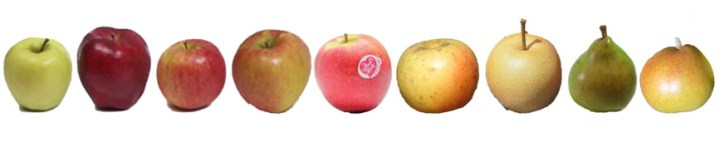 Varieties of apples and pears on our multi-grafted tree.