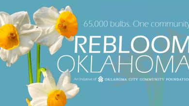 Photo of Free bulbs for Spring Daffodil Joy