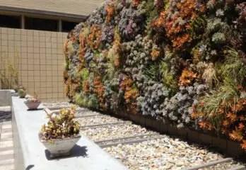 budget friendly backyard landscaping