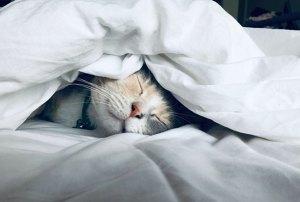 trouble du sommeil : traitement naturel avec la luminothérapie