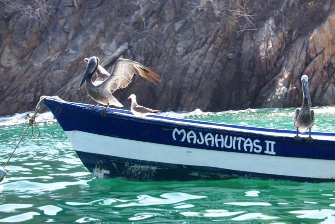 Diving Puerto Vallarta 4