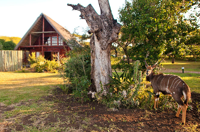 Rhino River Lodge An Exclusive African Escape 3