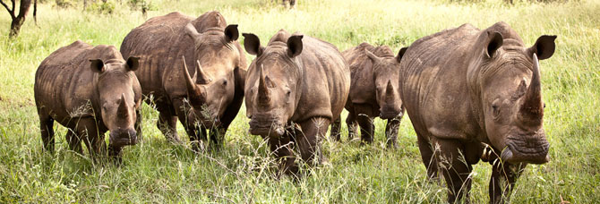 Rhino River Lodge An Exclusive African Escape 9