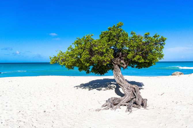 Top 10 Caribbean Islands to Visit by Superyacht Aruba