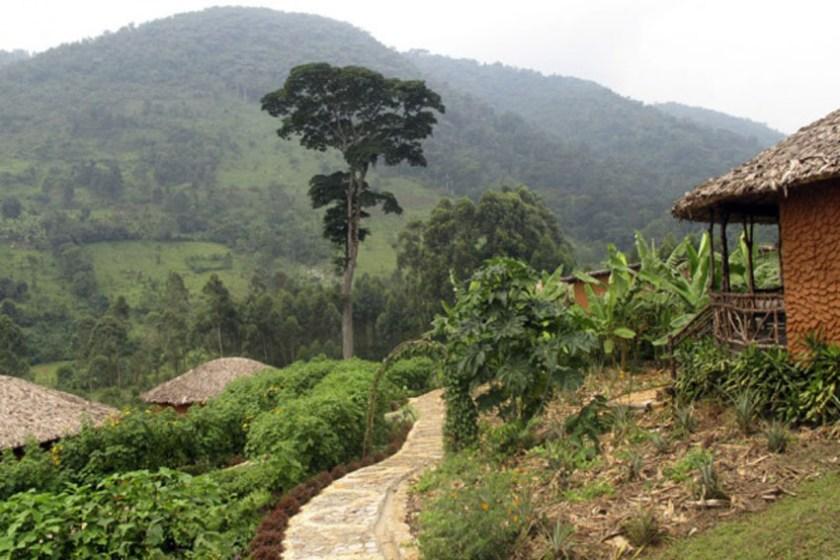Mahogany Springs Uganda 1