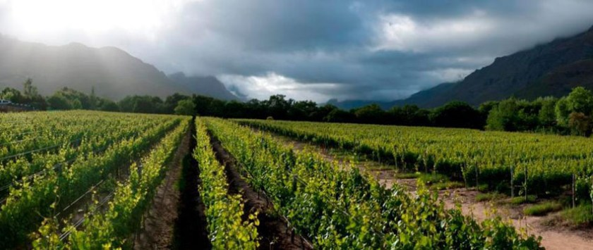 Lanzerac Wine Estate Stellenbosch 1