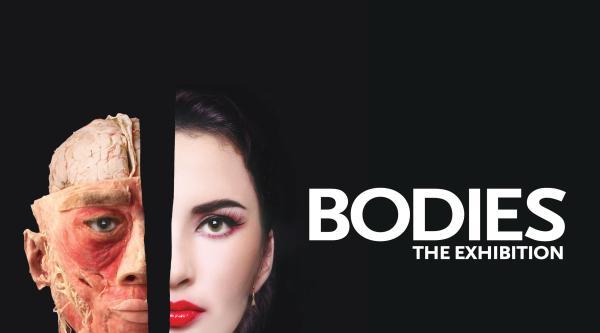 Luxor Bodies Exhibit Las Vegas
