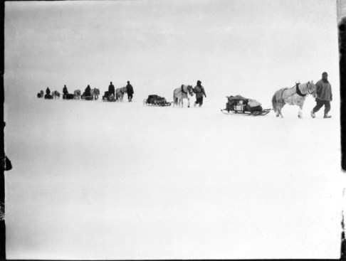 S55a Ponies on the march, Great Ice Barrier, 2 Dec 1911 © Richard Kossow, courtesy of ATLAS Gallery
