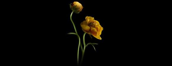 floressence-2-fev-14