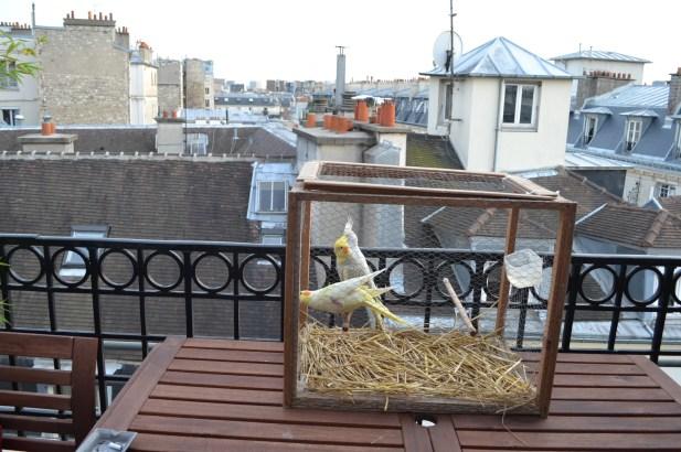 Sur la terrasse  / Copyright Julien Tissot