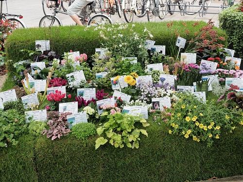 Le Festival des Fleurs, Odense