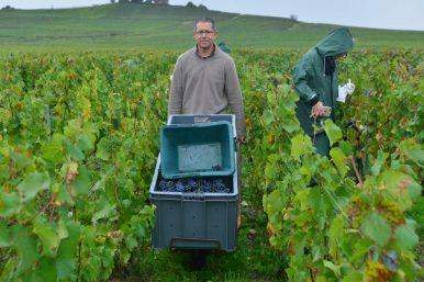 Vendanges Veuve Clicquot - photo Michel Jolyot (125)