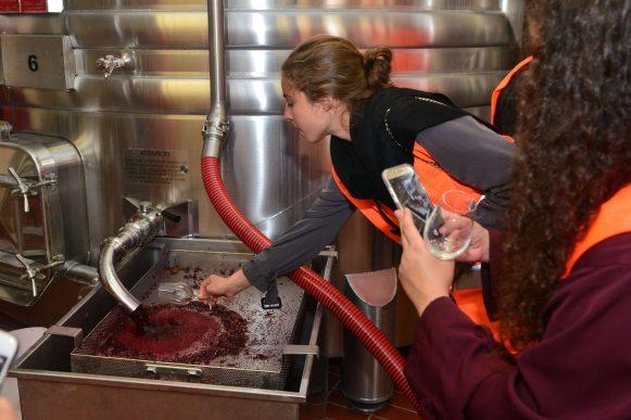 Vendanges Veuve Clicquot - photo Michel Jolyot (319)