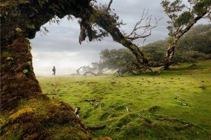 Paysage, végétation et nature - @razvancasian