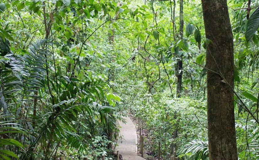 Hiking Through Manuel Antonio National Park in Costa Rica