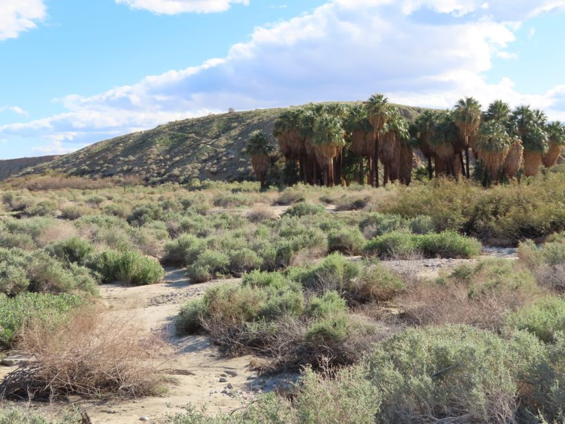 Hiking_Trail_Thousand_Palms_Oasis