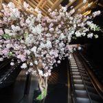 Sakura At Sake No Hana 6