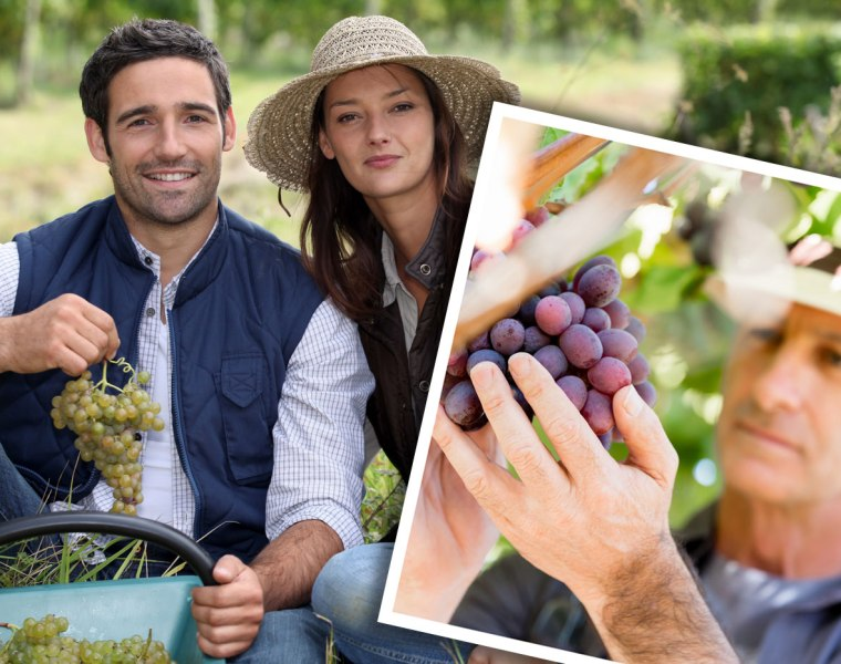 Bordeaux Vineyards Lead The Way in Sustainable Viticulture