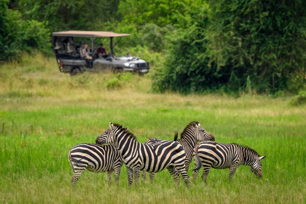 Luxury Safari Camp Magashi Opens In Rwanda's Akagera National Park 9