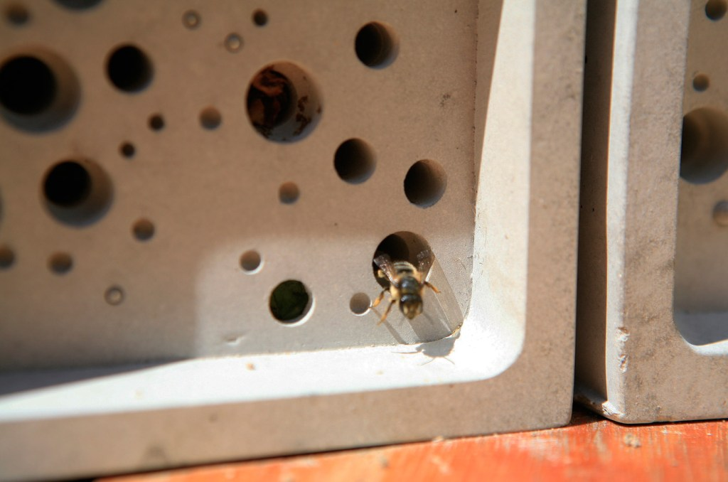 Lovell Steps Forward to Help the Plight of Britain's Bees 2