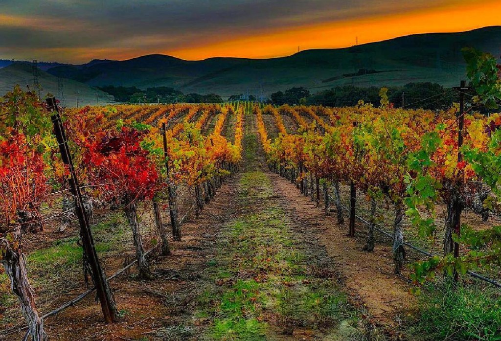 Tri-Valley on the Ultimate California Winter Road Trip
