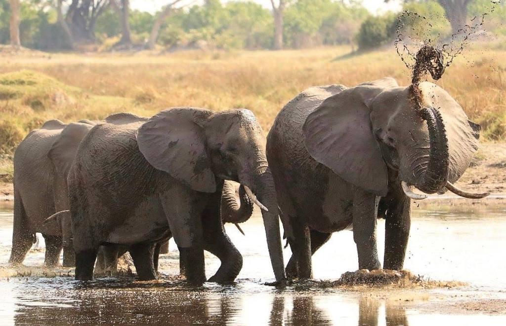 A Milestone for Marvellous Matusadona National Park, Zimbabwe