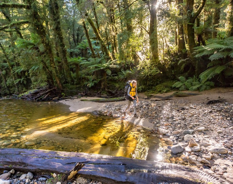 Paparoa Trail New Zealand's Great New Walk Officially Opens 20