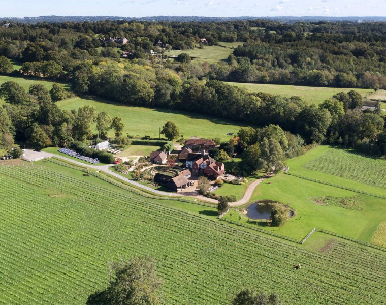 Growing in the Right Direction at Dillions Vineyard in West Sussex