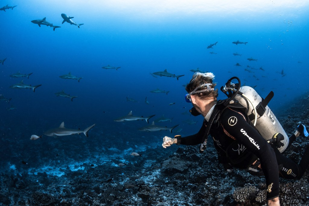 White tip reef sharks off the Islands of Tahiti