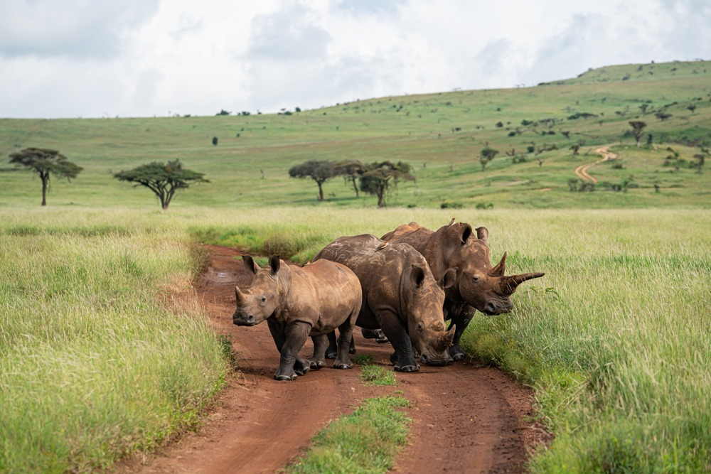 Lewa – Protecting Rhino and the Community in Kenya