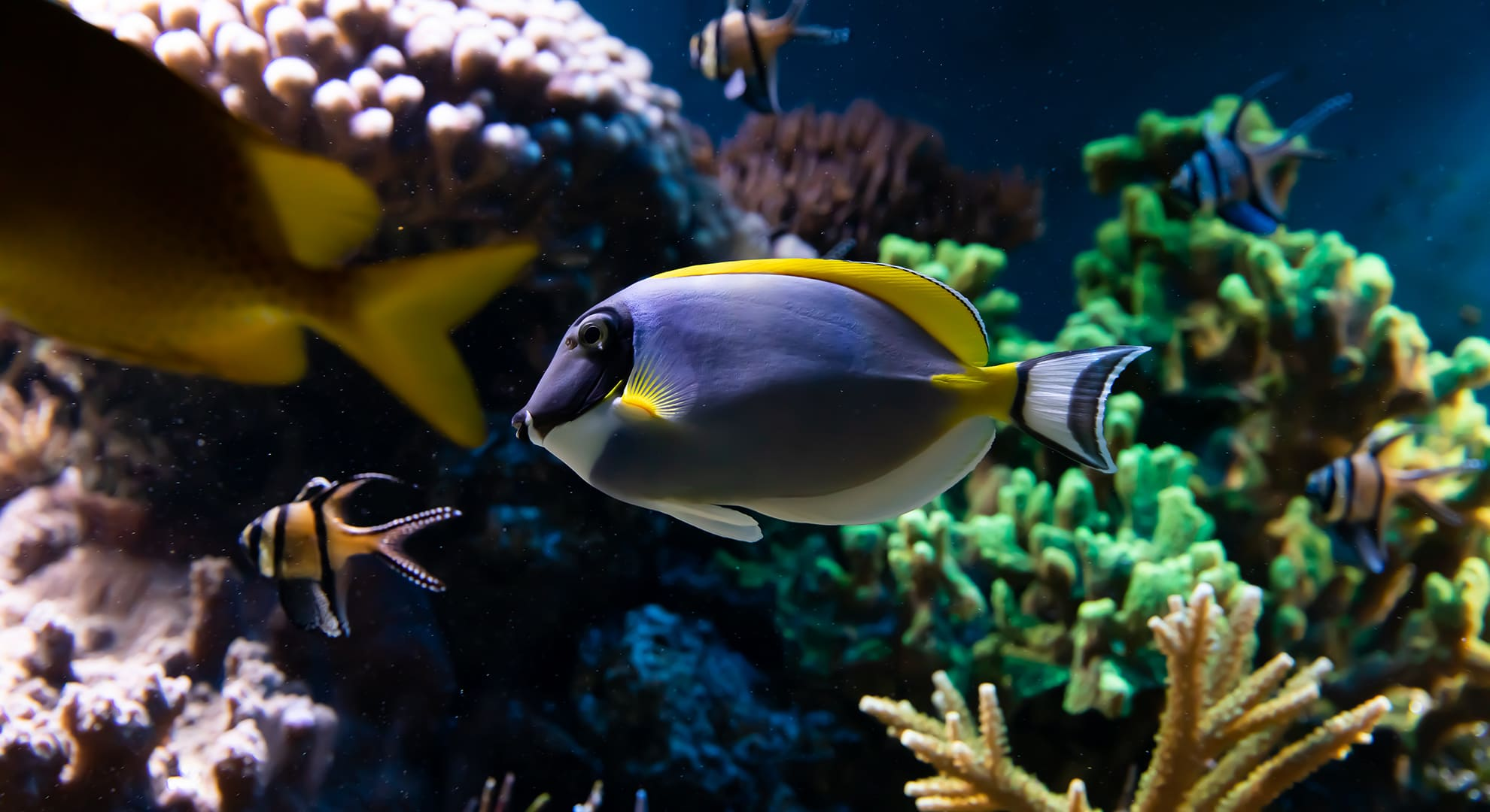 Cayman Island Luxury diving