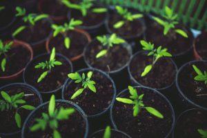 nákup rastlín do záhrady