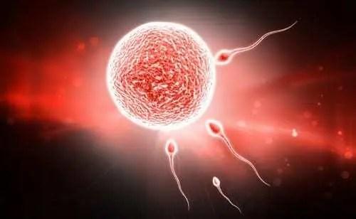 Espermatozoides tentando entrar em ovário.