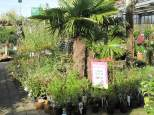 jardin31