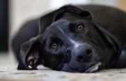 dog-448988