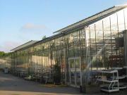 Serre verre de 1100 m²