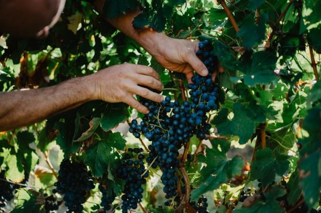 Détails grappe