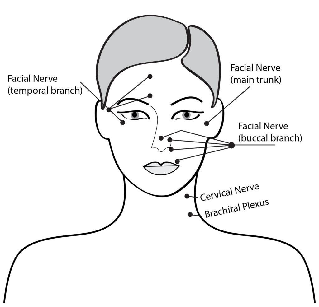 massage technique diagram boat trailer how to perform facial benefits