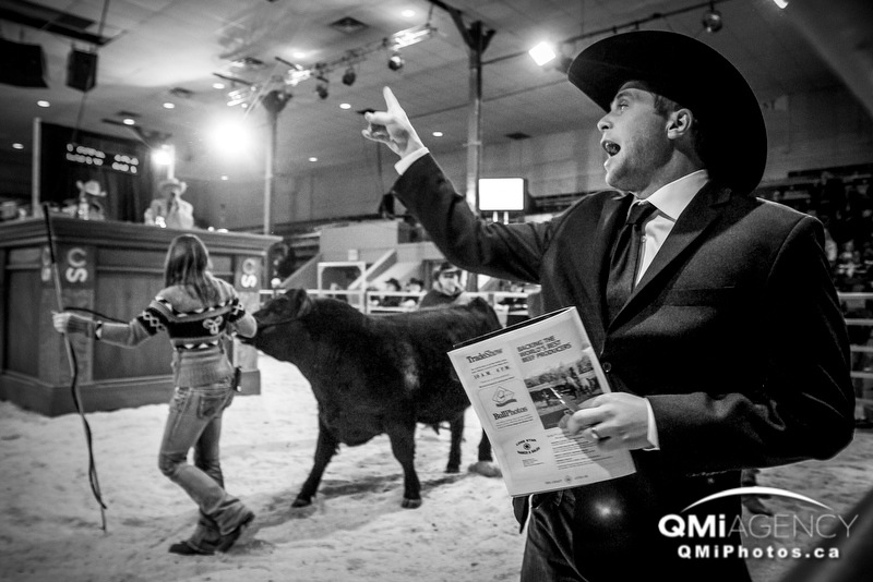 Brad Balog calls an auction bid during the 114th annual Calgary Bull Sale at the Stampede Grounds Agriculture Building in Calgary, Alta., on Thursday March 6, 2014. The two-day sale was happening during record-setting cattle prices in the industry. Lyle Aspinall/Calgary Sun/QMI Agency
