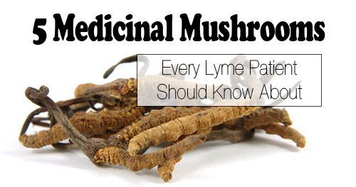 5 Medicinal Mushrooms Every Lyme Patients Should Know About