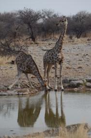 Namibië 2208