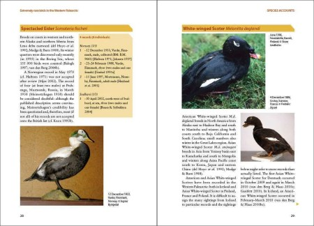 Extremely Rare Birds in the Western Palearctic sample page