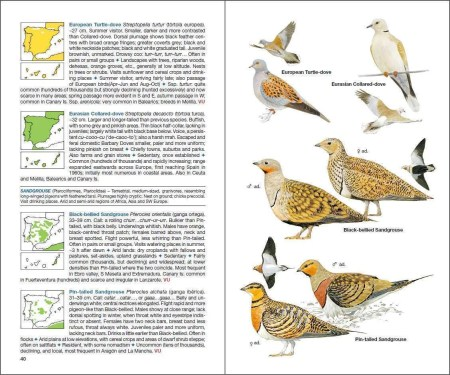 Birds of Spain sample page