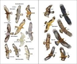 Aves de Portugal sample page