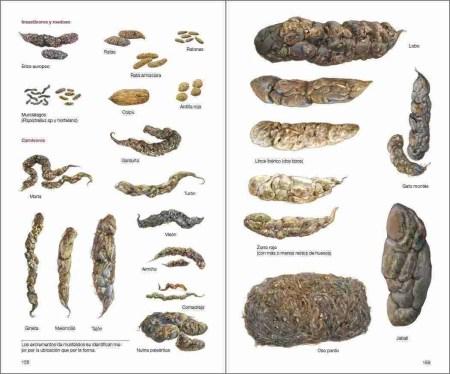 Mamíferos de España sample page