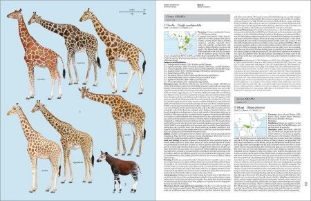 Handbook of the Mammals of the World - Volume 2 sample page