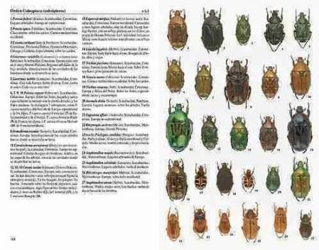 Insectos de España y Europa sample page
